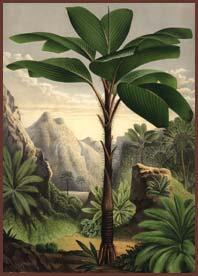 Darwin footer logo